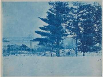 """Trees in a Winter Landscape"""