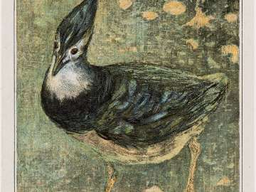 Lapwing (1908 Calendar: May)