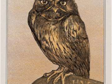 Owl (1908 Calendar: February)