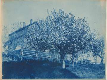House with Trees in Bloom