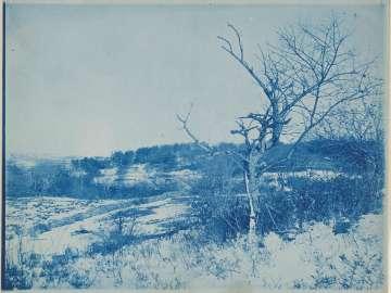 Tree in Field in Winter
