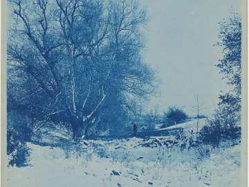 """""""Tree in a Winter Landscape"""""""