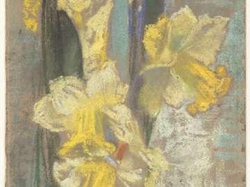 Winter Daffodils