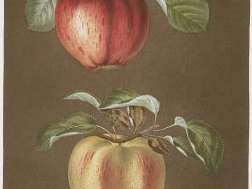 Pomona Britannica; or, A Collection of the Most Esteemed Fruits at Present Cultivated in this Country