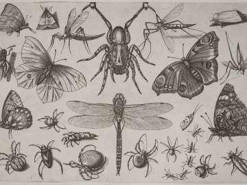Diversae Insectarum Volatilium icones ad vivum accuratissime depictae...