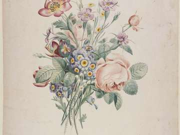 Bouquet with Pink Roses and Blue Auriculas (Possibly a proof before numbers for Prévost,