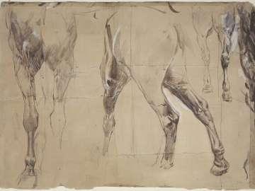 Study of Horses' Legs
