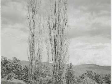 Poplars, Lake George