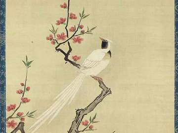 Long-tailed Bird Perched on Red Peach Branch