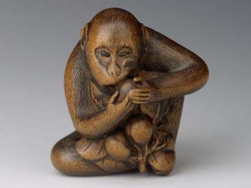 Monkey eating persimmon