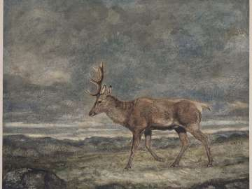 Walking Stag