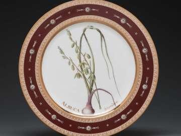Plate from Service des plantes de la Malmaison