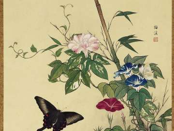 Butterfly and Morning Glory