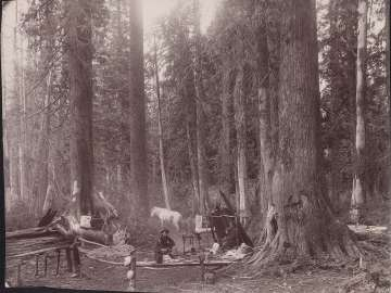Loggers Camping