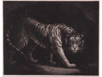 Tiger (Tyger)