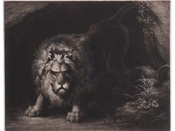 A Lion Coming out of a Cave