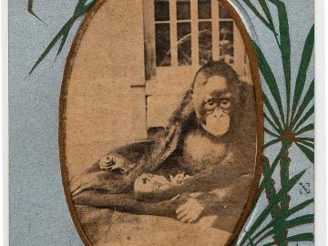 The Orangutan from the series Commemoration of the Anniversary of the Kyoto Zoological Park (Kyoto shiritsu kinen dobutsuen kinen ehagaki)