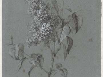 Floral Study (Lilacs)