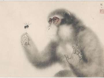 Monkey Catching an Insect