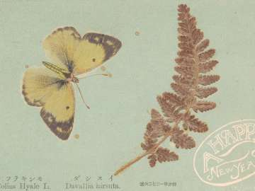 New Year's Card: Butterfly and Fern
