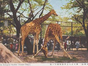 Ueno Zoological Gardens from the series Greater Tokyo (Dai Tokyo)
