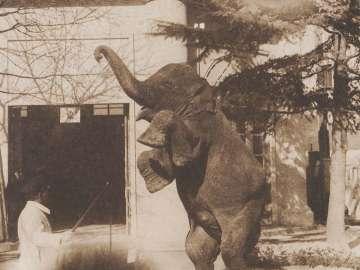 Takarazuka Zoological Garden