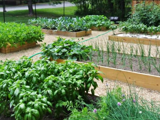 Community garden with beds of produce