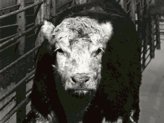 Film still from Meat