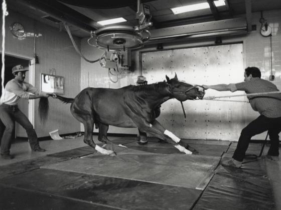 film still from racetrack