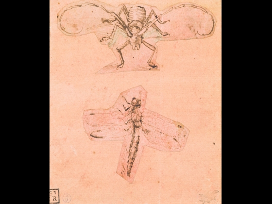 Leonardo da Vinci, Two Studies of Insects (Study of a Beetle and Study of a Dragonfly), about 1480–1500 (Beetle) and about 1503–05 (Dragonfly)