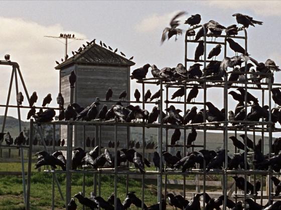 Film still from The Birds