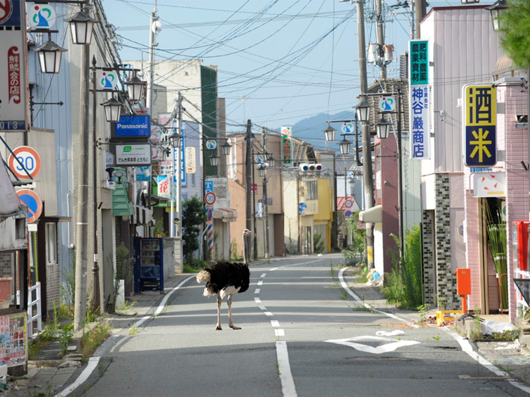 Yasusuke Ōta, Deserted Town from the series The Abandoned Animals of Fukushima, 2011
