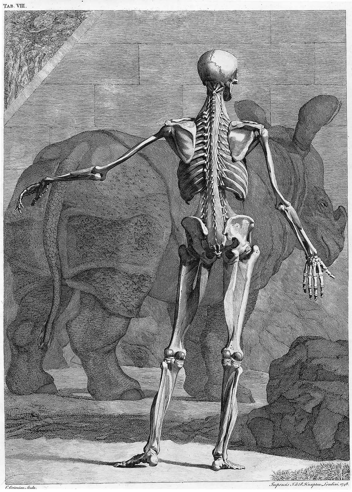 Tables of the Skeleton and Muscles of the Human Body | Museum of ...