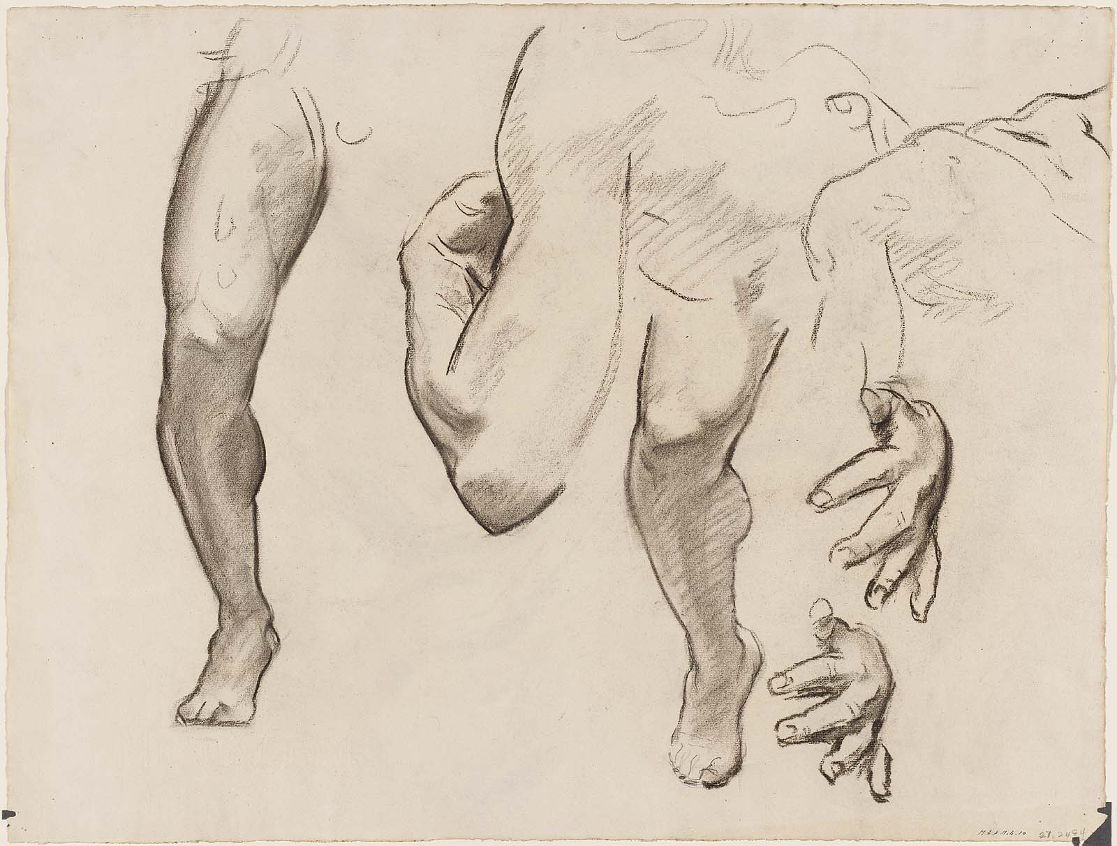 Leg, Arm and Hand Study for Architecture, Painting and Sculpture ...