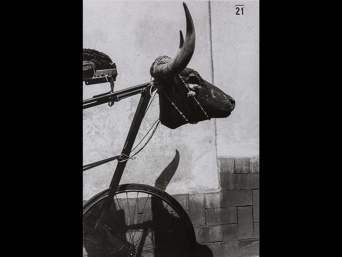 Graciela Iturbide's photograph, Torito, Coyoacán, Ciudad de México (Little Bull, Coyoacán, Mexico City)