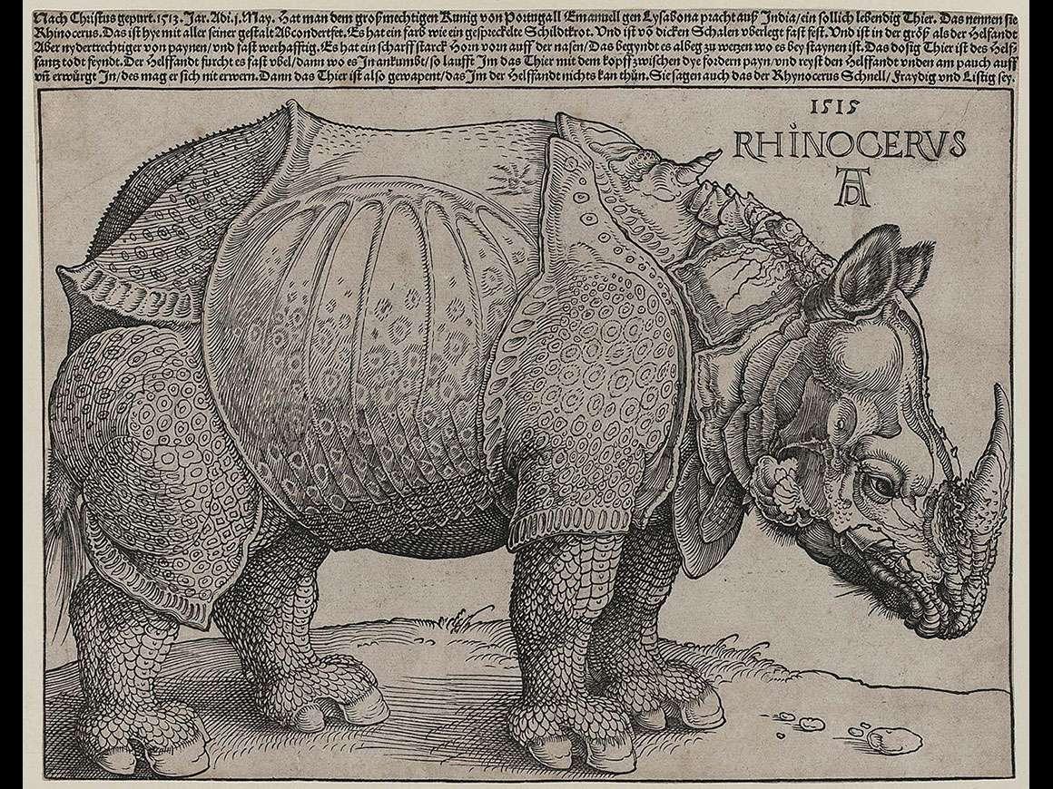 Albrecht Dürer's print, Rhinoceros