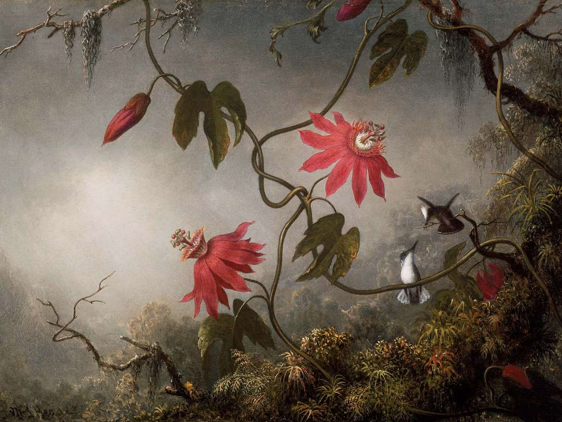 Martin Johnson Heade, Passion Flowers and Hummingbirds, about 1870–83. Gift of Maxim Karolik for the M. and M. Karolik Collection of American Paintings, 1815–1865. 47.1138