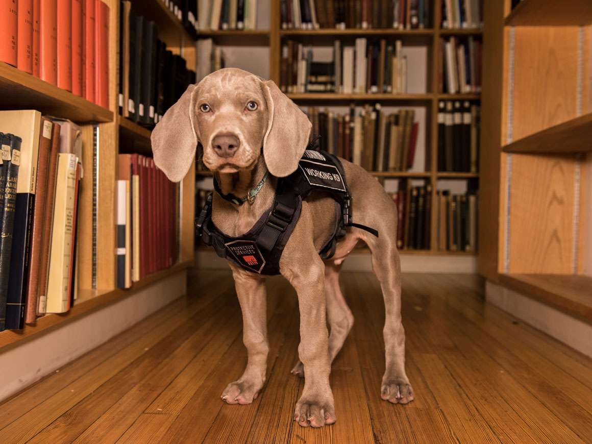 Riley standing amongst bookshelves in Art of the Ancient World Library