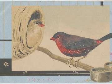 Red Sparrow (Beni suzume)