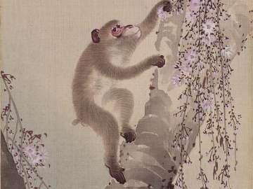 Monkey and Cherry