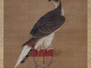 Falcon on a Perch