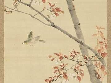Birds, Maple, Cherry
