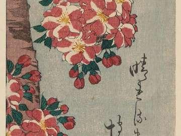Double Cherry in Flower