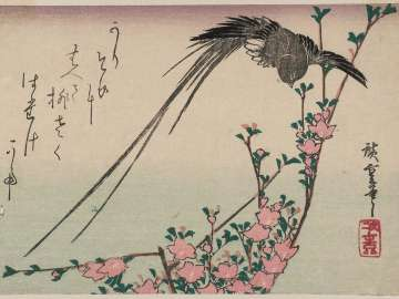 Long-tailed Bird and Peach Blossoms