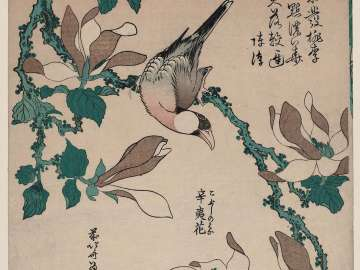 Java Sparrow on Magnolia (Bunchô, kobushi no hana), from an untitled series known as Small Flowers