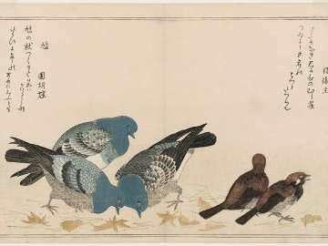 Sparrows (Murasuzume) and Pigeons (Hato), from the album Momo chidori kyôka awase (Myriad Birds: A Kyôka Competition)