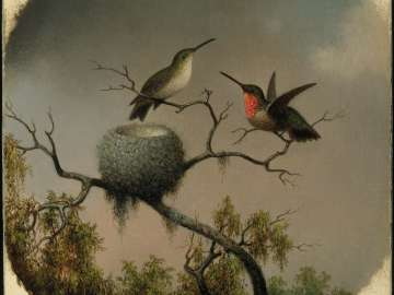 Hummingbirds with Nest