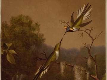 Brazilian Hummingbirds IV (Heliactin Cornuta)