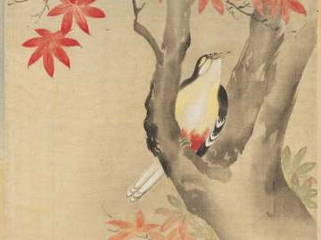 Flicker and Maple Tree