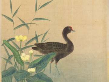Gallinule and Water Plantain